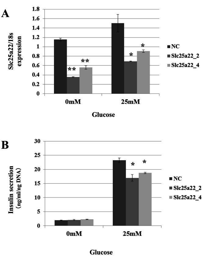 SiRNAs for Slc25a22 inhibits glucose-induced insulin secretion in the MIN6 islet β-cell line. SiRNA for Slc25a22 (Slc25a22_2, Slc25a22_4) or control siRNA was transfected into the MIN6 islet β-cell line. (A) Expression of Slc25a22 mRNA. Quantitative RT-PCR analyses of the expression levels of Slc25a22 mRNA were performed 48 h after transfection of MIN6 cells with Slc25a22 (Slc25a22_2, Slc25a22_4) or control siRNA. The 18S ribosomal RNA was used to normalize the expression levels. Data show the mean + SD for n = 3 repeats. ** p