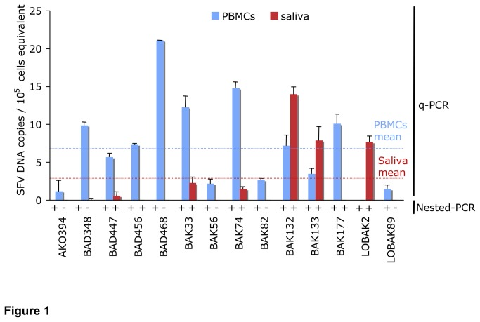 Detection and quantification of Simian Foamy Virus (SFV) <t>DNA</t> in samples of PBMCs and saliva derived from 14 humans infected by a gorilla strain of SFV. Detection of SFV DNA: Presence (+) or absence (-) of SFV DNA in PBMCs and saliva samples of each individual are indicated, based on <t>nested-PCR</t> results. Quantification of SFV DNA: Blue and red bars represent mean SFV DNA levels from at least two independent assays run in duplicate in PBMCs and saliva samples, for each individual respectively. Viral loads were normalized to cell equivalents by q-PCR for albumin. Error bars represent the standard deviations from an individual participant. Mean of SFV DNA copies in PBMCs (blue) and saliva (red) of the 14 individuals are shown by the dotted lines.