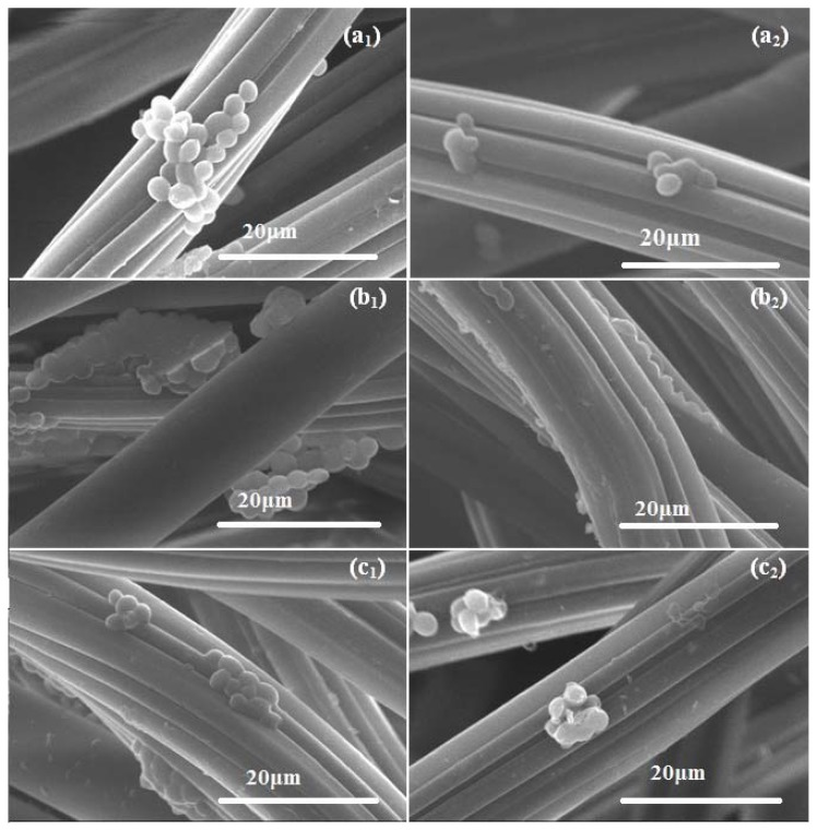 SEM micrographs indicating the C. albicans biofilm development comparatively on control WDs (after 24 h— a 1 , 48 h— b 1 and 72 h— c 1 incubation time) and on MNP@18-SH coated WDs (after 24 h— a 2 , 48 h— b 2 . and 72 h— c 2 incubation) (2500×). The Candida biofilms developed on the coated WDs are strongly damaged and drastically reduced.