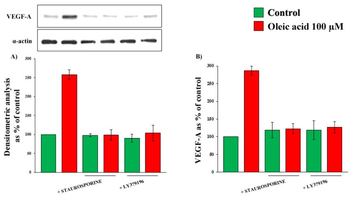 Influence of a 24-h incubation with 100 μM oleic acid (on VEGF-A synthesis (Panels A ) and secretion (Panels B ) in VSMC from LZR, without or with a 1-h pre-incubation with inhibitors of PKC (Staurosporine and LY379196).