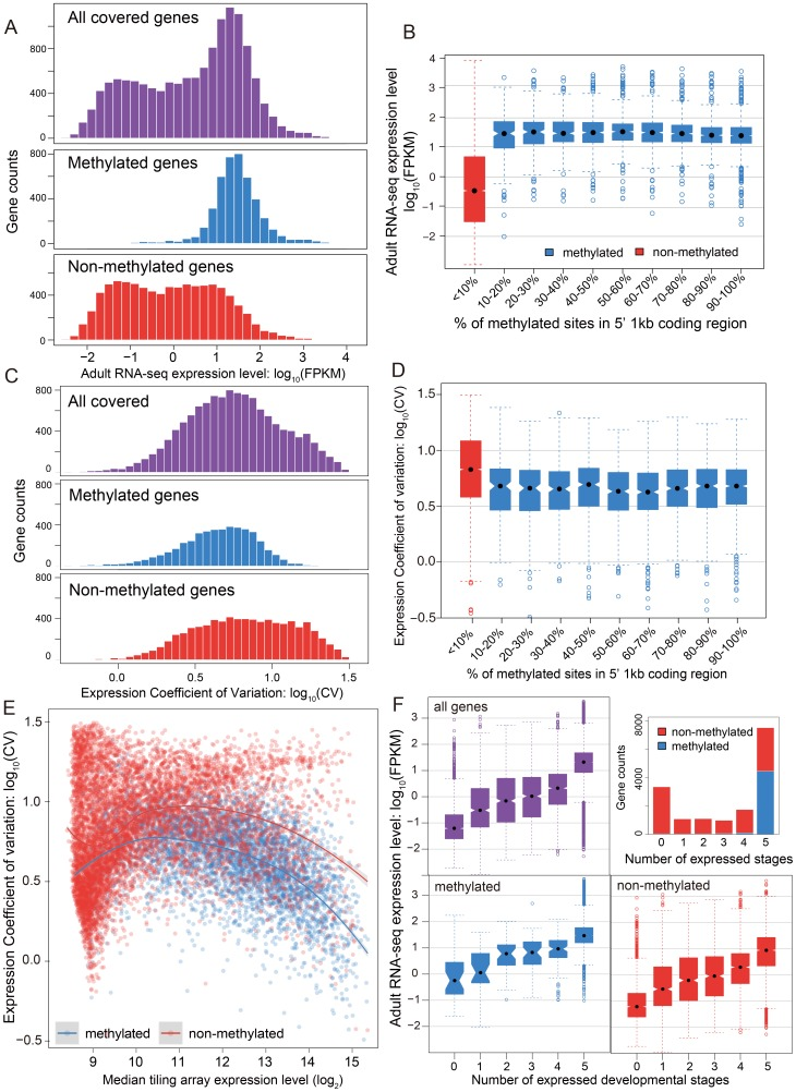 DNA methylation, gene expression and expression breadth. (A) Distribution of RNA-seq expression level (log 10 FPKM) in adult female for methylated (blue), non-methylated (red) and all genes (purple). (B) Distribution of RNA-seq expression level (log 10 FPKM) in adult female for groups of genes binned by percentage of methylated CpG sites in 5′ 1 kbp coding region. Red: non-methylation genes; blue: methylated genes. (C) Histograms for distribution of expression coefficient of variation (log 10 expression CV) in five developmental stages (early embryo, late embryo, larvae, pupae and adult) for methylated (blue), non-methylated (red) and all genes (purple). (D) Distribution of expression breadth measurement (log 10 expression CV) in six developmental stages for groups of genes binned by percentage of methylated CpG sites in 5′ 1 kbp coding region. Red: non-methylation genes; blue: methylated genes. (E) Scatterplot of expression breadth (log 2 expression CV) on y-axis against median expression level (log 2 signal intensity) in tiling array on x-axis, color-coded by adult female methylation status (blue: methylated genes; red: non-methylated genes). Fitted lines using non-parametric local regression are shown for methylated and non-methylated genes respectively. (F) Top right panel: Stacked barplot for expressed methylated and non-methylated genes with 0 to 6 expressed stages. Red: unmethylation genes; blue: methylated genes. Top left and bottom panel: boxplot for distribution of adult female RNA-seq expression level (log 10 FPKM) for methylated (in blue), non-methylated (in red) and all genes (in purple) expressed in 0–5 developmental stages.