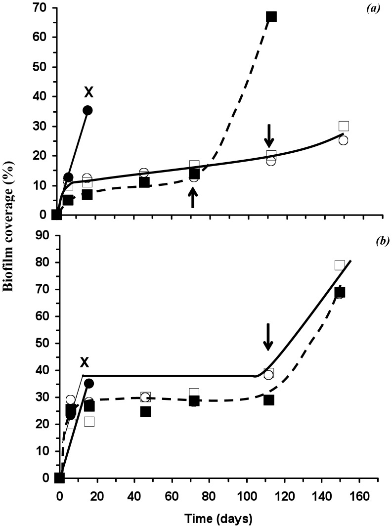 Microbial percent surface area of PHB (a) and P(HB- co -8HV) (b) films, with burial time; ( ) 0% w/w, (▪) 2.5%, (○) 5% and (□) 10% (w/w) DCOI loadings, 'X' material weight loss too great to accurately measure biofilm coverage, arrows indicate onset of material weight loss for scl- PHA-DCOI films.