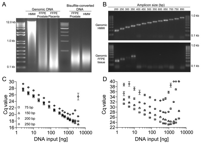 Degradation of DNA from FFPE Tissues and its Effect on PCR Amplification of Amplicons with Different Sizes. Analysis of DNA integrity of genomic and bisulfite-converted DNA from unfixed and FFPE tissues by means of (A) agarose gel electrophoresis and (B) end-point PCR using PCR fragments of different sizes within the PITX2 gene locus. (C) qPCR results applying increasing amounts (2.5–3,840 ng) of genomic template DNA from unfixed and (D) from FFPE tissue. Shown are the mean values (± standard deviations) from triplicate measurements. Each PCR was performed with 1 U Taq polymerase. DNA from unfixed specimens is considered high molecular weight (HMW) DNA.