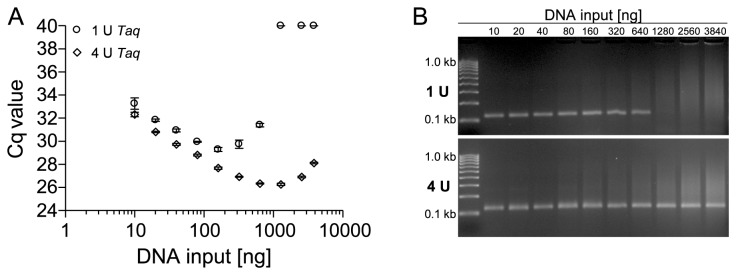 PCR Inhibition by Bisulfite-Converted Template DNA from FFPE Tissues. (A) qPCR–amplification of different amounts (10–3,840 ng) of bisulfite-converted template DNA from FFPE tissue using a 129-bp PCR fragment within the ACTB gene locus. 1 U and 4 U Taq polymerase were used for qPCR. Shown are the mean values (± standard deviations) from triplicate measurements. (B) PCR amplification of the specific PCR product was confirmed by agarose gel electrophoresis using 1 U (upper panel) and 4 U (lower panel) Taq polymerase.