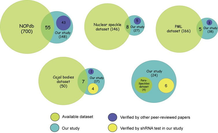 Comparison of our study with datasets on nuclear subcompartments. Datasets were created for each nuclear subcompartment based on online databases or recent review articles. NOPdb ( Ahmad et al., 2009 ) was used to represent nucleolar proteins. A proteomic analysis of interchromatin granule clusters ( Saitoh et al., 2004 ) was used to represent the nuclear speckles dataset. A PML body interactome analysis ( Van Damme et al., 2010 ) was used to represent proteins in PML bodies. A list of Cajal body proteins from a recent review paper ( Machyna et al., 2013 ) was used to represent proteins in Cajal bodies. A list of paraspeckle proteins from a review ( Bond and Fox, 2009 ) was used to represent proteins in paraspeckles. Venn graphs were used to show the extent of overlapping between an available dataset (green) and our study (blue). A group of proteins that are uniquely identified in our study and have been reported by others in the literature were presented in dark blue. The other groups of proteins that are confirmed by our shRNA screen to be involved in the assembly of Cajal bodies or paraspeckles were presented in yellow. Please also see Table S2 and Table S3 .
