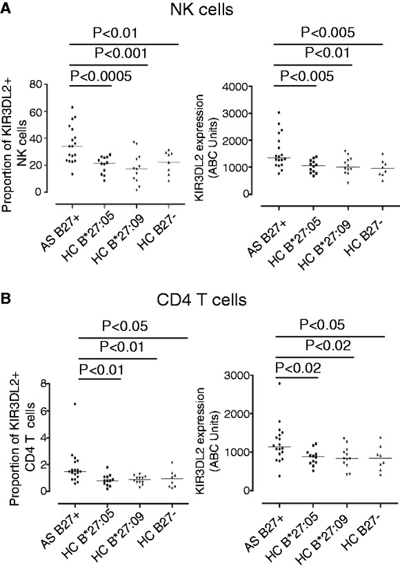 Increased expression of KIR3DL2 by leucocytes from HLA-B*27:05+ patients compared with HLA-B27− and HLA-B*27:05+ and HLA-B*27:09+ healthy controls (HCs). ( A ) Left hand panel: percentage of NK cells expressing KIR3DL2 in HLA-B*27:05 + SpA patients, HLA-B*27:05+ HC, HLA-B*27:09 HC and HLA-B27 negative HC. Percentages of NK cells expressing KIR3DL2 were 35.6 ± 13.6 (mean ± 1 s.d. ), 20.3 ± 6.3 ( P = 0.0004), 17.9 ± 11.3 ( P = 0.0007) and 22.3 ± 8.5 ( P = 0.007) for each of the respective groups. Right hand panel: level of expression of KIR3DL2 (ABC units) by SpA patient NK cells, HLA-B*27:05+, HLA-B*27:09+ and HLA-B27− HC. HLA-B*27:05+ SpA patients expressed 1571 ± 631.9 ABC units compared with 1038 ± 235.7 units ( P = 0.003) for HLA-B*27:05 HC, 1049 ± 331.5 ( P = 0.007) for HLA-B*27:09+ HC and 961 ± 318 units ( P = 0.003) for HLA-B27 negative HC. ( B ) Left hand panel: percentages of CD4 T cells expressing KIR3DL2 in HLA-B*27:05 + SpA patients, HLA-B*27:05+, HLA-B*27:09 + and HLA-B27 negative HC. A mean of 1.8 ± 1.3 SpA CD4 T cells, 0.8 ± 0.4 HLA-B*27:05 HC ( P = 0.01), 0.9 ± 0.3 B*27:09 HC ( P = 0.009) and 1.0 ± 0.7 ( P = 0.04) B27 negative HC expressed KIR3DL2. Right hand panel: SpA patient CD4 T cells expressed 1232 ± 513.8 ABC units of KIR3DL2, compared with 878.3 ± 199 HLA-B*27:05 HC ( P = 0.011), 859.3 ± 288.7 HLA-B*27:09 HC ( P = 0.016) and 847 ± 321 B27 negative HC ( P = 0.030).