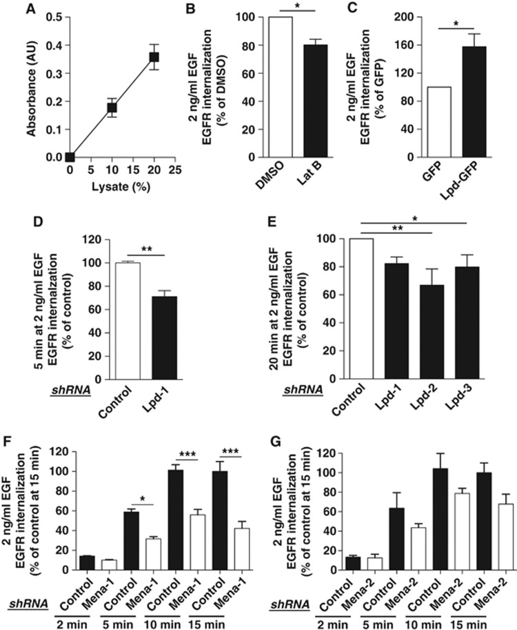 Lamellipodin, Mena, and F-actin regulate EGFR internalization. ( A ) Linear increase in the absorbance of biotinylated surface EGFR with increasing amounts of lysates of HeLa cells. Values are mean (±s.e.m.) of six independent experiments. ( B ) EGFR internalization in HeLa cells treated with Latrunculin B (Lat B) or DMSO control and 2 ng/ml EGF. ( C ) EGFR internalization in HeLa overexpressing Lpd-GFP or GFP as a control and treated with 2 ng/ml EGF. ( D – G ) EGFR internalization in HeLa cells expressing three Lpd-specific ( D , E ) or two Mena-specific ( F , G) or control shRNA and treated with 2 ng/ml EGF for indicated times. ( B – G ) Results are mean±s.e.m. of at least three independent experiments. ( B – D ) t -test: * P