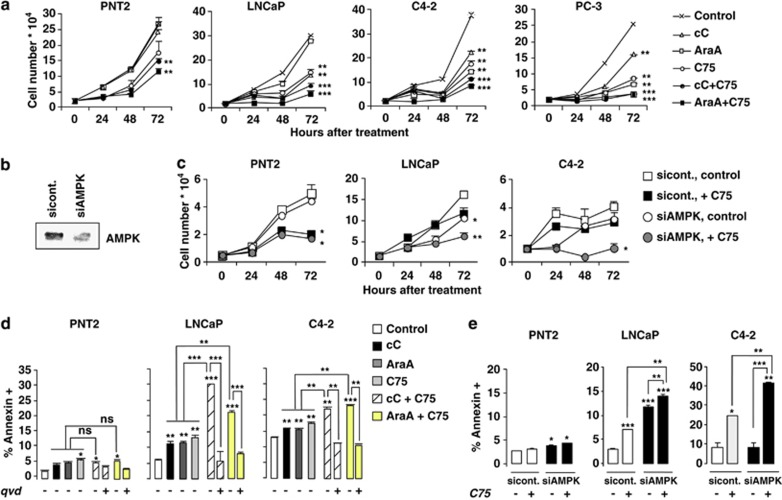 Combined AMPK and FASN inhibition blocks PC cells' proliferation in vitro and induces caspase-dependent apoptosis. ( a ) Effects of cC and C75 inhibitors on LNCaP and C4-2 cell proliferation was assessed by cell counting at the indicated times. ( b – e ) Genetic inhibition of AMPK in PNT2, LNCaP and C4-2 cells was performed by nucleofaction with siRNA against hAMPKα1/2. Reduced AMPKα1/2 expression is shown by AMPKα1/2 immunoblotting ( b ) in LNCaP cells 24 h after transfection with control or siRNA against hAMPKα1/2. ( c ) Proliferation of sicont- or siAMPKα1/2—PNT2, LNCaP or C4-2 cells was measured by cell counting following treatment with control or C75-supplemented media at the indicated times. ( d ) Effect on cell viability was analyzed by FACS by measuring the percentage of annexin V-FITC+ cells at 16 h following treatment with control or C75-supplemented media at the indicated times. Rescue from apoptosis induction was analyzed following pre-treatment of cells with 20 μ M qVD-oph caspase inhibitor. ( e ) Effect on cell viability was analyzed by FACS by measuring the percentage of annexin V-FITC+ cells at 16 h after indicated siRNA treatments.