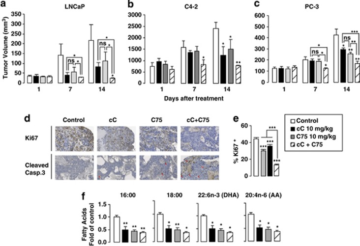 Combined AMPK and FASN inhibition reduces tumor growth in mice. ( a–c ) Tumor volume progression of subcutaneously implanted LNCaP ( a ), C4-2 ( b ) and PC-3 ( c ) cells in nude athymic mice was measured weekly following intraperitoneal injection with 10 mg/kg of either cC alone, C75 alone or both cC and C75 for 5 days a week. Values are expressed as the mean tumor volume (mm 3 )±s.e.m. ( n =5 for each group) from day 1 to day 14. ( d ) Ki67 and cleaved caspase-3 immunostaining of C4-2 tumor sections. ( e ) Quantification of cycling Ki67+ cells on C4-2 tumor sections. Six fields per section were analyzed for Ki67 immunostaining indicative of cell proliferation. Sections of tumors of all mice were analyzed. At least 300 cells were counted per tumor. ( f ) The lipidic composition was analyzed in total lipids extracted from C4-2 tumor tissues. Values are expressed as fold of control (mean±s.e.m.).