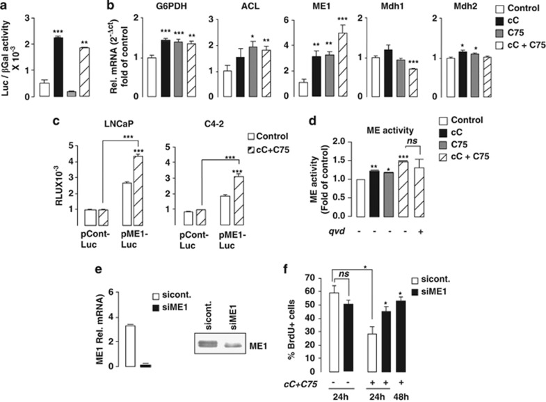 Combined AMPK and FASN inhibition in PC cells is associated with an increased ME activity. ( a ) Induction of the SREBP-1 transcriptional activity following cC+ C75 co-treatment was assessed by measuring firefly Luc activity in LNCaP cells overexpressing SREBP-1 and FAS-Luc promoters, as compared with control. Values are expressed as relative luciferase unit (RLU) normalized relative to the β-galactosidase activity. ( b ) Variations in mRNA expression levels of SREBP-1 target genes G6PDH , ATP-citrate lyase , ME1 and malate dehydogenases ( Mdh )-1 and -2 were analyzed by RT-qPCR in LNCaP cells at 24 h following indicated treatments. ( c ) Induction of the ME1 transcriptional activity following cC+ C75 co-treatment was assessed by measuring Renilla luciferase (Luc) activity in LNCaP and C4-2 cells overexpressing ME1-Luc promoter, as compared with control. Values are expressed as relative luciferase unit (RLU) normalized relative to the β-galactosidase activity. ( d ) Induction of ME enzymatic activity in whole LNCaP cells was analyzed by spectrophotometry in the presence of NADPH substrate at 24 h following indicated treatments. ( e ) Rescue from the antiproliferative effect of cC+C75 treatment in LNCaP cells was conducted by genetic inhibition of ME1. ME mRNA and protein expression is indicated. ( f ) Quantification of the percentage of BrdU-incorporating cells transfected with siRNA against ME1, as compared with control.