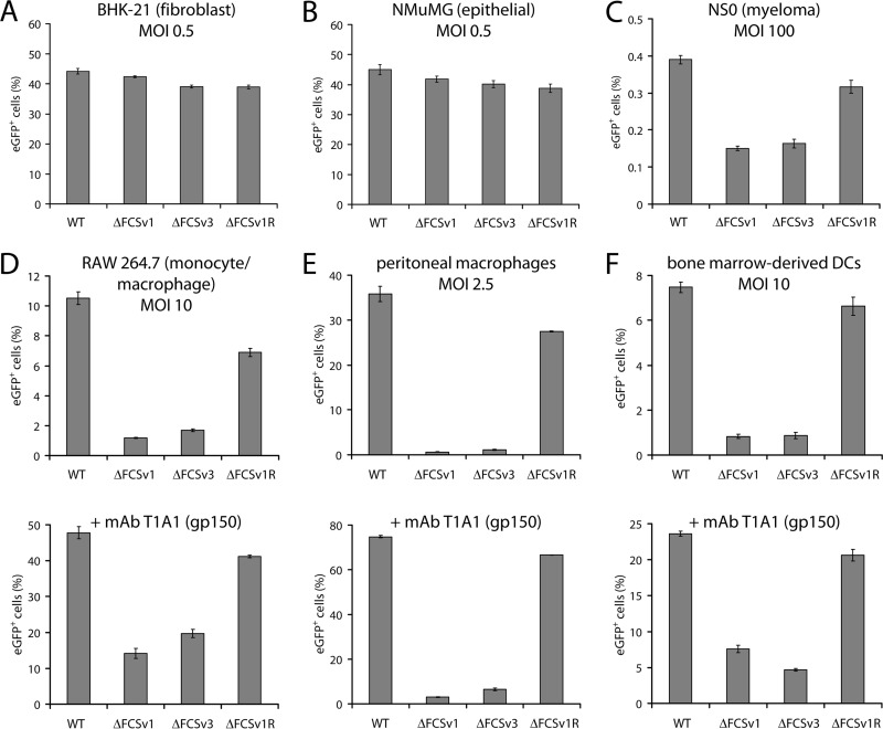Comparative analysis of virus entry in fibroblasts, epithelial cells, myeloma cells, macrophages, and DCs. (A and B) BHK-21 fibroblasts (A) or NMuMG epithelial cells (B) were infected with eGFP + WT, ΔFCSv1 and ΔFCSv3 mutant, and ΔFCSv1 revertant viruses at an MOI of 0.5 eGFP units/cell. After incubation in the presence of 100 μg/ml PAA for 18 h at 37°C, the proportion of eGFP + cells was determined by flow cytometry. The bars show the means ± standard errors of the means from 3 wells. Equivalent data were obtained in 3 further experiments. (C) NS0 myeloma cells were infected as for panel A but at an MOI of 100 eGFP units/cell. The bars show the means ± standard errors of the means from 3 wells. The values for the gB FCS − viruses (ΔFCSv1 and ΔFCSv3) were significantly lower than those for the gB FCS + viruses (WT and ΔFCSv1 R) ( P