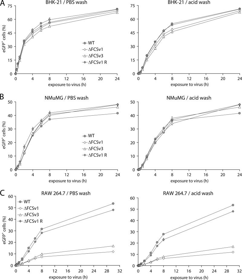 Kinetics of virus entry in fibroblasts, epithelial cells, and macrophages. (A) BHK-21 fibroblasts were exposed at 37°C to eGFP + WT, ΔFCSv1 and ΔFCSv3 mutant, and ΔFCSv1 revertant viruses at an MOI of 1 eGFP units/cell in the presence of 100 μg/ml PAA for the times indicated on the x axis. The cells were then washed with PBS to remove unbound virions or with phosphate-citrate buffer (pH 3) (acid wash) to inactivate all extracellular virions, followed by incubation at 37°C in the presence of 100 μg/ml PAA until 24 h p.i. The proportion of eGFP + cells was then determined by flow cytometry. Each point shows the mean ± standard error of the mean from 3 wells. The incubation times required for half-maximal infection levels ( t 50% ) were as follows (mean ± standard error of the mean): PBS wash, 2 ± 0.05 h for gB FCS + (WT and ΔFCSv1 R) and 2.3 ± 0.1 h for gB FCS − (ΔFCSv1 and ΔFCSv3) viruses; acid wash, 4.1 ± 0.08 h for gB FCS + and 4.7 ± 0.15 h for gB FCS − viruses. For acid wash, the difference in t 50% values was statistically significant ( P