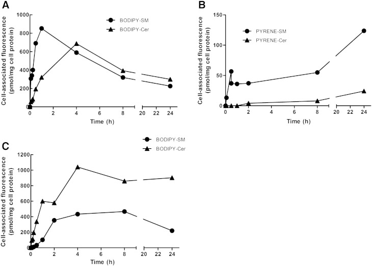 Uptake and metabolism of fluorescent SM and Cer analogs during steady state labeling. CATH.a cells were incubated with (A) BODIPY-SM, (B) PYRENE-SM, or (C) BODIPY-Cer (1 μM each) for the indicated time periods at 37 °C. Cells were washed with HBSS, scraped, and cellular lipids were extracted with CHCl 3 /MeOH, dried, dissolved in ethanol, and analyzed by HPLC. Results shown represent mean values from one representative experiment performed in duplicates.