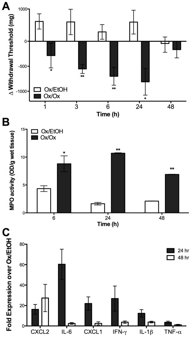 Labiar oxazolone challenge induces acute vulvar mechanical hyperalgesia in sensitized female ND4 Swiss mice. Mice that received a single oxazolone challenge following sensitization show increased mechanical hyperalgesia (A), increased myeloperoxidase activity in the labiar tissue (B), and increased abundance of CXCL2 , IL-6 , CXCL-1 , IFN-γ , IL-1β , and TNF-α mRNAs (C). Significances are compared to Ox/EtOH (* = p