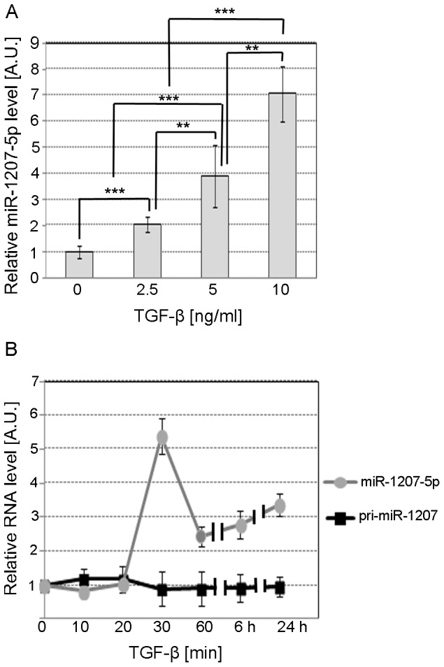 TGF-β1 dose-response and time-course effect on miR-1207-5p. A . TaqMan qPCR relative quantification of miR-1207-5p in MC treated for 24 h with serum-free medium supplemented with 2.5, 5.0, or 10.0 ng/ml TGF-β1. B . Relative quantification of miR-1207-5p and pri-miR-1207 in MC treated for different times with serum-free medium supplemented with 10 ng/ml TGF-β1. RNU6B, UBC, and 18S RNA were used as endogenous controls. Results represent averages from three independent experiments. Data are means ± SD. A.U.: arbitrary units. The significance is indicated only for samples that are significant different from all the others. * P
