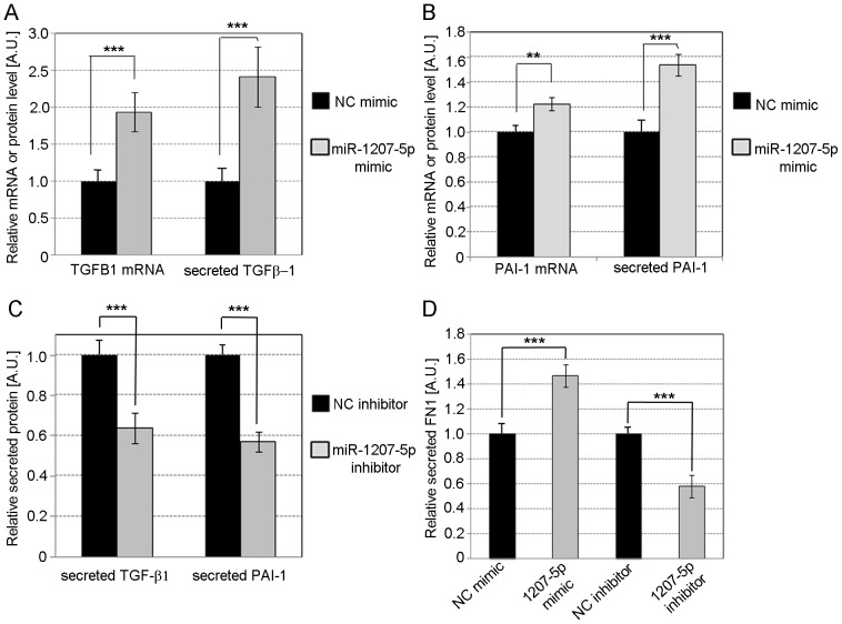 Effect of miR-1207-5p on TGF-β1, PAI-1 and FN1. Relative quantification of TGF-β1 ( A ) and PAI-1 ( B ) mRNA and secreted protein in MC over-expressing miR-1207-5p compared to control. ( C ) Relative TGF-β1 and PAI-1 protein secreted by MC transfected with miR-1207-5p inhibitor or NC inhibitor compared to control. ( D ) Relative quantification of secreted FN1 from MC with miR-1207-5p over-expression or knockdown compared to control. Cells were transfected with 3 µl Lipofectamine RNAiMAX mixed with 30 nM miR-1207-5p or negative control (NC) mimic, or 50 nM of miR-1207-5p inhibitor or NC inhibitor. Specific mRNAs were quantified by TaqMan qPCR using PPIA and UBC as endogenous controls. Secreted TGF-β1, PAI-1, and FN1 were determined by ELISA. Results represent averages from three independent experiments. Data are means ± SD. A.U.: arbitrary units. The significance is indicated only for samples that are significant different from all the others. * P