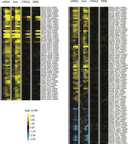Unbiased and targeted proteomics comparison to deep sequencing data. Data from 150 proteins targeted in SRM assay to validate iTRAQ data. Comparison heat map of mRNA and footprint read density with iTRAQ and SRM relative protein abundance. DOI: http://dx.doi.org/10.7554/eLife.01236.021