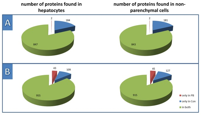 Distribution of distinct proteins, when comparing controls with PB-treatment from the in vitro and in vivo sample pools, respectively. This figure demonstrates the distribution of distinct proteins found in HCs and NPCs during the pooled A) in vitro and B) in vivo experiments, while including only proteins found with at least 2 peptides. The up- and down-regulation of proteins were neglected in this qualitative comparison.