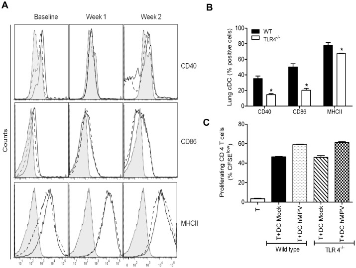 Lung dendritic cell characterization and lymphocyte proliferation in response to hMPV infection in TLR4 −/− mice. TLR4 −/− and WT mice were mock- or hMPV-infected, and sacrificed at week 1 and 2 p.i. to collect lungs. Single cell suspension was obtained and cDCs population enriched using CD11c-tagged magnetic beads isolation. CD40 and CD86 markers were analyzed in cells positive for CD11c and MHC-II by flow cytometry. Histograms showing the expression of costimulatory molecules (CD40, CD86 and MHCII) in cDC from WT mice (open histograms) and cDC from TLR4 −/− mice (dashed line open histograms), and isotype control (shaded histograms), are shown ( A ). Graph of baseline expression of costimulatory molecules in lung dendritic cells isolated from WT and TLR4 −/− mice ( B ). Dendritic cells (CD11c positive cells) were isolated from lungs of hMPV or mock-infected mice either WT or TLR4 −/− at day 7 p.i. and loaded with 10 µg/mL of OVA peptide for 2h prior to coculture with T cells. CD4 + T cells isolated from spleen of OT II mice were labeled with CFSE and cocultured with DCs at a ratio of 1∶2 (DC: T). T cell proliferation was measured by CFSE dilution (proliferating CD4 + cells have a lower CFSE intensity than non-proliferated control cells). Cultures without antigen served as controls. The bar graph shows the percentage of proliferating (CFSE low ) T cells among the total CD4 + T cell population. Data are expressed as mean ± SEM of four mice/group and represent one of two independent experiments ( C ).