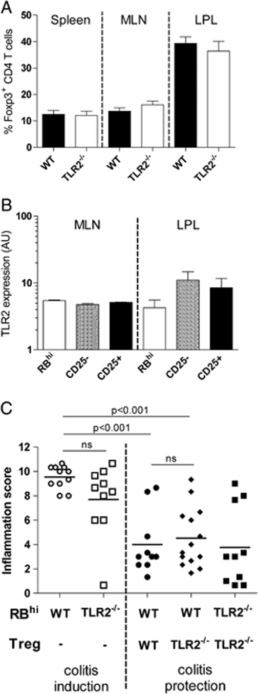 """T-cell intrinsic TLR2 signals are not required for effector T-cell or Treg functions in vivo . (A) CD4 + T cells from the spleen, MLN and colonic LPL were analyzed for Foxp3 expression by flow cytometry. Data represents group means (±SEM) from two pooled independent experiments ( n =8–10 mice per group). (B) NaYve CD45RB hi (RB hi ), memory CD25 − CD45RB lo (CD25 − ) and Treg CD25 + CD45RB lo (CD25 + ) CD4 + T cells were sorted from the MLN and LPL of B6 WT mice ( n =5) and analyzed for TLR2 gene expression by Q-PCR. Data represent means±SEM normalized relative to HPRT. (C) B6.RAG −/− mice were reconstituted with either 4×10 5 WT or TLR2 −/− CD4 + CD45RB hi T cells alone (colitis """"induction"""") or concurrently with 2×10 5 WT or TLR2 −/− CD4 + CD25 + Treg (colitis """"protection""""). After 8–10 wk colonic pathology was assessed histologically. Each symbol represents a single animal and the data represents pooled results of two independent experiments ( n =10–14 mice per group). Horizontal lines represent group means and differences were assessed using the Mann–Whitney U -test; ns, not significant."""