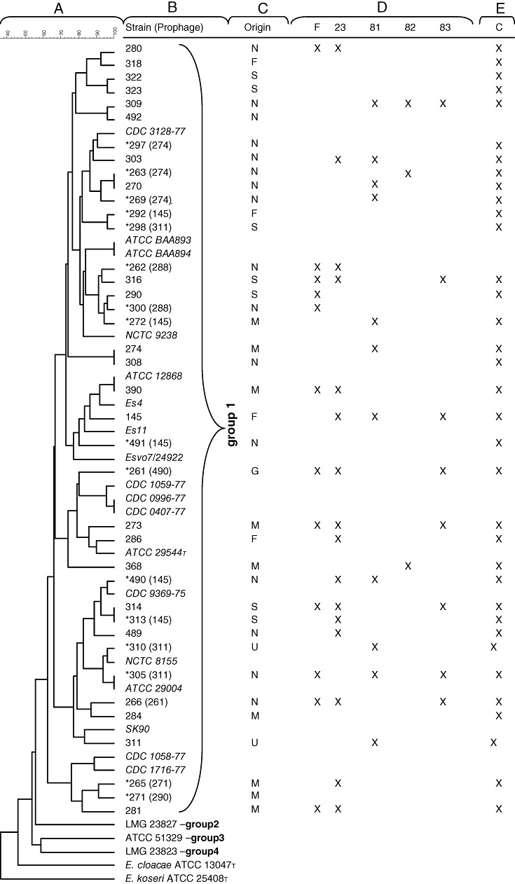 E. sakazakii host strain differentiation. From left to right: Dendrogram of 39 strains of E. sakazakii (A) (the scale bar shows the percentage of similarity), obtained after restriction with EcoRI. Groups 1–4 indicate assignment of the strains to 16S rRNA groups ( Iversen et al. , 2007a ). The FSM strain designation (with reference strains in italics) is shown (B). The star symbol (*) indicates the presence of a prophage and the strain designation in parenthesis corresponds to the indicator strain used to reveal it. Origins (N, the Netherlands; F, France; S, Switzerland; M, Malaysia; G, Germany; U, USA) of the selected strains (C). Susceptibility of the E. sakazakii strain from the corresponding row to infection with E. sakazakii phages F, 23, 81, 82 and 83 as determined by the plaque assay using 10 5 pfu ml −1 on <t>BHI‐agar;</t> 'X' indicates observation of phage plaques (D). <t>Enterobacter</t> sakazakii challenge test in infant formula using a cocktail of the five phages showing the broadest host range on E. sakazakii ; 'X' indicates prevention of outgrowth of 10 2 cfu ml −1 E. sakazakii when phage was added at 10 8 pfu ml −1 (E).