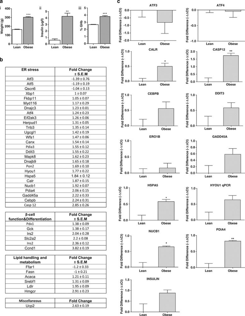 Obesity leads to increased ER stress in female ZDF rats. ( a i) Body weight in grams, ( a ii) plasma insulin after an overnight fast and ( a iii) %GHb in fZDF rats (obese) and their lean littermates (lean). ( b ) Differential gene expression in the islets of fZDF rats (obese) and their lean littermates (lean) assessed using TLDA is expressed as a fold change and is normalised to 18S ribosomal RNA. Data are shown as mean±s.e.m. ( n =3). ( c ) Relative expression of selected transcripts from the islets of fZDF rats (obese) and their lean littermates (lean) by single-gene Taqman RT-qPCR. Results are expressed as relative expression levels and normalised to ribosomal protein P2 (RPP2). Values are mean±s.e.m. determined from control lean ( n =3) and obese rats ( n =3). Statistical significance was determined using an unpaired two-tailed Student t -test. * P