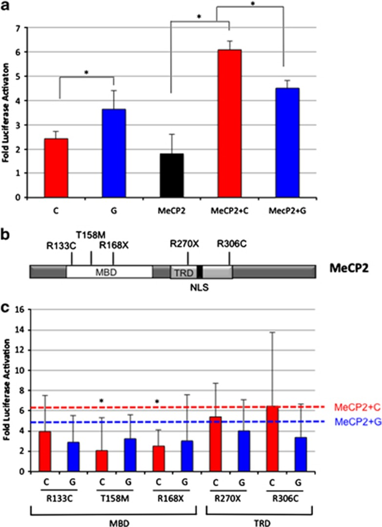 Functional characterization of <t>MeCP2</t> and MECP2 mutations on MET transcriptional activation. ( a ) Luciferase reporter assays demonstrate differential activation of the MET promoter by MeCP2. MET luciferase reporter constructs containing rs1858830 G or C were transiently transfected into HEK cells with or without addition of MECP2 <t>cDNA.</t> * P