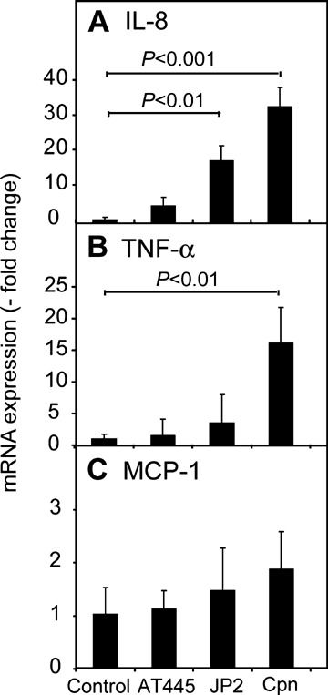 Effect of pro-atherogenic bacteria on human mast cell cytokine expression. Cultured human mast cells were infected with Aggregatibacter actinomycetemcomitans (Aa) strains AT445b and JP2 or Chlamydia pneumoniae (Cpn) in a cell-to-bacteria ratio of 1: 10 and incubated for 6 hrs. mRNA expressions for IL-8 ( A ), TNF-α ( B ) and monocyte chemoattractant protein-1 (MCP-1) ( C ) were analysed by real-time PCR using TaqMan chemistry. Data are normalized to β-actin and presented as means ± SD.