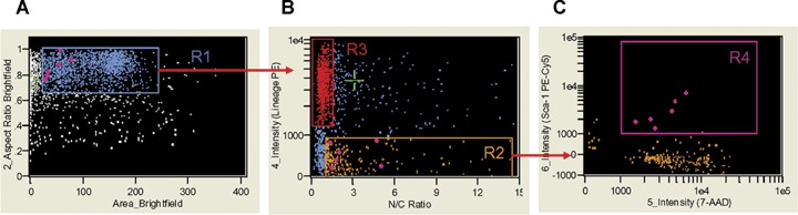 Analysis of nuclear to cytoplasmic ratio by ImageStream system. Single, round cells from region R1 ( A ) were visualized based on their nuclear to cytoplasm ratio and Lin markers expression (X- and Y- axis, respectively ( B ). Cellular populations were gated including Lin + cells with low nuclear to cytoplasmic ratio (0.936 ± 0.016) (region R3, red) and Lin − cells with high N/C ratio (3.485 ± 0.248) (region R2, orange). Objects from region R2 were farther analysed for their CD45 and Sca-1 expression (X- and Y-axis, respectively ( B ). Cells with VSELs' phenotype (Sca-1 + /Lin − /CD45 − ) and characterized by higher N/C ratio (1.471(0.171) were included in region R4 (magenta; C ) and visualized on the other plots as diamonds (magenta). N/C ratio was calculated as nuclear area divided by cytoplasmic area computed from nuclear (7-AAD) and brightfield images. Signals of brightfield, Lin-PE and 7-AAD were collected by the IS in channels 2, 4 and 5, respectively. Mean (± S.E.M.) values of N/C ratio were calculated using IDEAS software.