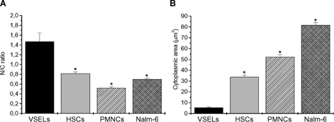 N/C ratio and cytoplas-mic area of VSELs. Mean N/C ratios ( A ) and cytoplasmic areas ( B ) of murine BM-derived Sca-1 + /Lin − /CD45 − cells (VSELs) as well as Sca- 1 + /Lin − /CD45 + cells (HSCs), PB-derived granulocytes (PMNCs) and human Nalm-6 cells were measured using the IS. All values are presented as mean (± S.E.M.as calculated by IDEAS software. P