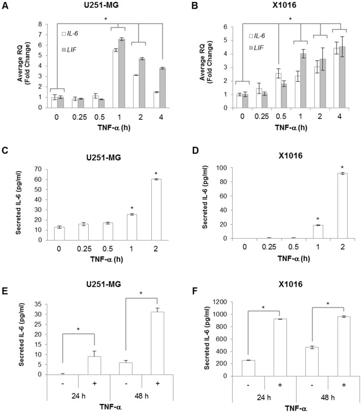 TNF-α Induces IL-6 and LIF Expression in Glioma Cells. A B, U251-MG and X1016 cells were treated with TNF-α (10 ng/ml) for the indicated times. RNA was isolated followed by generation of cDNA, and qRT-PCR was performed for the indicated genes. Data are shown as replicates of three and the experiment repeated with similar results observed. *, p