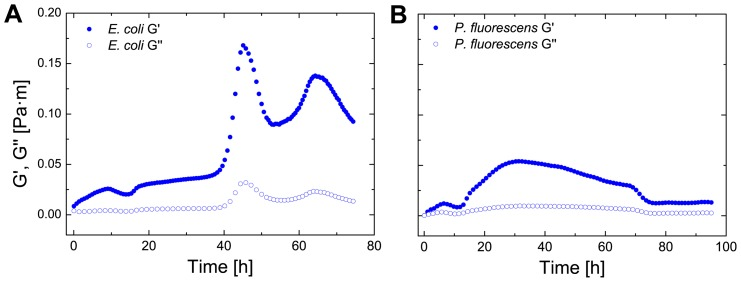 Transient biofilm elasticity of E. coli and P. uorescens . The elastic (G0) and viscous (G00) as a function of time for E. coli (A) and P. fluorescens (B).