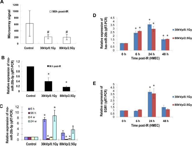 IR induces miR-20b expression in mammary gland tissues/cells in a dose- and time-dependent manner (A and B) Total RNA isolated from the mammary gland tissues of six-week-old female Long Evans rats exposed to either 30 kVp/0.1 Gy, 80 kVp/2.5 Gy X-ray, or sham-treatment 96 hours post-irradiation was subjected to microRNA microarray; the levels of rno-miR-20b were determined by real-time RT-PCR. (C) Total RNA was isolated from the mammary gland tissues of six-week-old female Long Evans rats at different time points post-IR, and the levels of rno-miR-20b were examined by real-time RT-PCR. (D and E) Total RNA isolated from HMEC exposed to either 30 kVp/0.1 Gy or 80 kVp/2.5 Gy X-ray was subjected to real-time RT-PCR using primers for hsa-miR-20b and EGR1. The hash indicates p