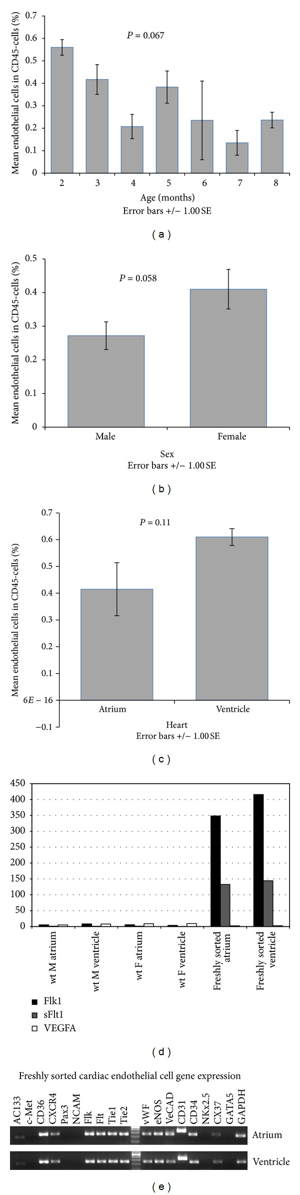 Freshly-sorted cardiac endothelial cells. Comparison of endothelial percentage within CD45− population among age (a) ( n = 28) and gender (b) ( n = 29). (c) The percentage of ECs within CD45− population between atrium and ventricle in 3-month-old mice ( n = 11). (d) q-RT-PCR levels for Flk-1 , soluble Flt-1, and VEGF-A of one male (M), one female (F), and freshly FACS-sorted ECs from atrium and ventricle normalized to GAPDH. (e) Representative RT-PCR analysis of freshly FACS-sorted ECs from atrium and ventricle (three females 15–24-month-old) showed expression of endothelial markers Flk-1, Flt-1, Tie-1, Tie-2, vWF, eNOS, VE-Cad, CD31, and CD34 while lacked cardiomyocyte marker NKx2.5 and endocardium marker GATA5. P values were calculated by ANOVA (a) or Student's t -test (b, c).