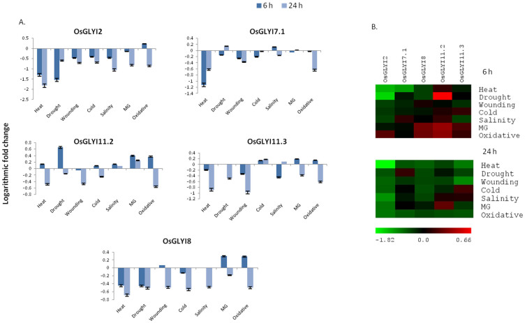 Transcript profiling of rice GlxI genes in response to various abiotic stress conditions. (A) Histogram depicting logarithmic expression change of rice GlxI genes based on qRT-PCR analysis. Real time PCR analysis was done with cDNA template generated from shoot tissue of 14 day old stressed or control seedlings. As OsGLYI7.2 and OsGLYI11.1 could not be amplified they are not included in the real-time PCR analysis. (B) Heat map and hierarchical cluster display of expression profile for GlxI genes showing different levels of expression in response to stress at 6 h and 24 h. Colour bar at the bottom represent expression values in terms of logarithmic fold, green (lowest), black (medium) and red (highest) expression levels.