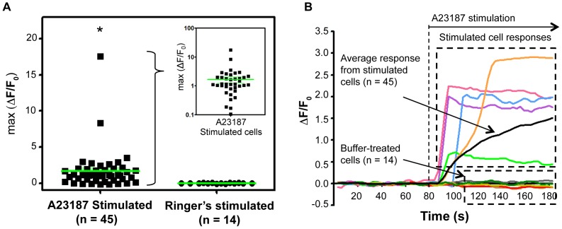 Ionophore-induced calcium influx in cells extracted from zebrafish olfactory epithelium. (A) Maximum fluorescence change in individual cells after stimulation with A23187 (n = 45) or Ringer's (n = 14). The inset depicts the data for the same cells on a log scale. (*p = 0.0144, unpaired one-tailed Student's t -test). (B) Change in fluorescence intensity relative to baseline fluorescence intensity (ΔF/F 0 ) plotted over time for representative cells. The black trace indicates the averaged response. A23187 was injected into the cell trap at the indicated time (80 s), and remained in the trap. Control cells stimulated with Ringer's buffer did not exhibit a significant change in fluorescence intensity.