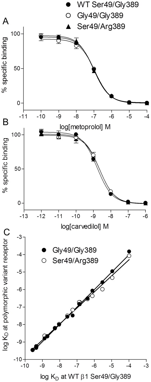 Inhibition of  3 H-CGP 12177 binding at the wildtype receptor and polymorphic variants. Inhibition of  3 H-CGP 12177 specific binding by  A  metoprolol and  B  carvedilol in wildtype (WT), Gly49/Gly389 cells and Ser49/Arg389 cells. Non-specific binding was determined by 10 µM propranolol. The concentration of  3 H-CGP 12177 present in each case was 0.96 nM. Data points are mean ± s.e.mean of triplicate determinations and these single experiments are representative of 6 separate experiments in each case.  C  Correlation plot for the affinity of all the ligands from   Table 1  for the wildtype (x-axis) and polymorphic variants (y-axis). There is a strong correlation between the affinity measurements made in the wildtype and those measured in either the Gly49/Gly389 receptor (R 2 =1.00, slope 0.99±0.01) and the Ser49/Arg389 receptor (R 2 =0.99, slope=0.92±0.02). This demonstrates that ligands had very similar affinity for all three receptors.