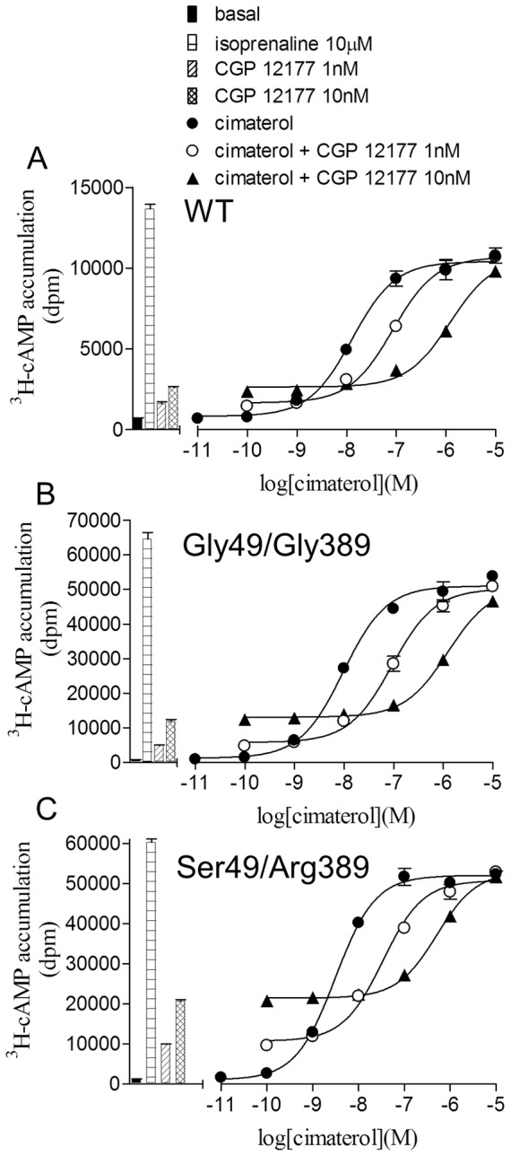 Inhibition of cimaterol-induced 3 H-cAMP accumulation responses by CGP 12177. 3 H-cAMP accumulation in response to cimaterol in A wildtype cells, B Gly49/Gly389 cells and C Ser49/Arg389 cells in the absence and presence of CGP 12177. Bars represent basal 3 H-cAMP accumulation, that in response to 10 µM isoprenaline and that in response to 1 nM and 10 nM CGP 12177. Data points are mean ± s.e.mean of triplicate determinations and these single experiments are representative of 4 separate experiments in each case. Here, CGP 12177 inhibits the catecholamine conformation response with high affinity in all three receptor variants.