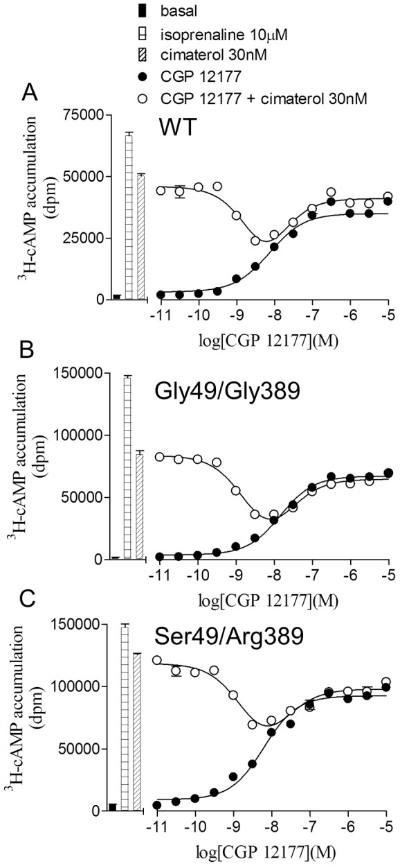 Demonstration of two agonist conformations of the wildtype β1-adrenoceptor and polymorphic variants. 3 H-cAMP accumulation in response to CGP 12177 in A wildtype cells, B Gly49/Gly389 cells and C Ser49/Arg389 cells in the absence and presence of 30 nM cimaterol. Bars represent basal 3 H-cAMP accumulation, that in response to 10 µM isoprenaline and that in response to 30 nM cimaterol. Data points are mean ± s.e.mean of triplicate determinations and these single experiments are representative of 5 separate experiments in each case. Low concentrations of CGP 12177 inhibit the high affinity catecholamine conformation and higher concentrations of CGP 12177 stimulate an agonist response. This demonstrates the two agonist conformations of the wildtype β1-adrenoceptor and that both of these agonist conformations are present in both polymorphic variants.