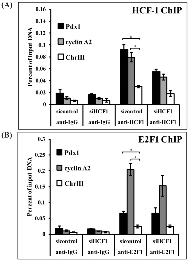 HCF-1 and E2F1 occupy the Pdx1 promoter. INS-1 cells treated with HCF-1 siRNA or control siRNA were subjected to chromatin immunoprecipitation assays using antibodies directed against (A) HCF-1, (B) E2F1 or isotype-matched rabbit IgG. Immunoprecipitated DNA was quantified using qPCR and calculated as percent of input DNA. Results shown are pooled from three independent experiments and represent the mean +/− SEM. HCF-1 and E2F1 enrichment at the Pdx1 and cyclin A2 promoters was significantly greater than at the negative control region (chrIII) (*denotes a p-value