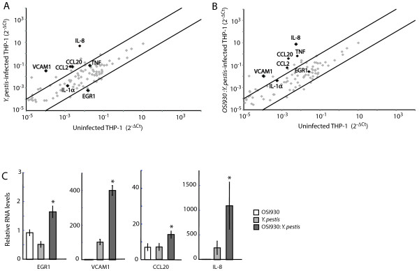 """Pathogenic Yersinia requires c-KIT activity for suppression of transcription factor and pro-inflammatory cytokine expression. (A-B) Analysis of signal transduction pathways in Y. pestis -infected THP1 cells in absence of c-KIT. THP1 cells untreated or pre-treated with 1μM OSI-930 for 18 h were infected with Y. pestis Ind195 at MOI 20 for 1h. <t>RNA</t> was isolated, converted to cDNA, and applied to a RT Profiler PCR Array for human signal transduction pathway expression analysis. Dot plots compare gene expression profiles between uninfected THP-1 cells and (A) Y. pestis Ind195-infected THP-1 cells or ( B ) OSI-930-pretreated, Y. pestis Ind195 infected THP-1 cells. Genes that do not exhibit significant expression changes between the control and experimental samples are concentrated between the two black lines. The black lines define the assay cut-off of 3-fold induction or 70% reduction of transcript levels. Genes of interest are highlighted in black. (C) Inhibition of c-KIT recovers EGR1, chemokine, and cell adhesion transcript levels in pathogenic Yersinia -infected THP1 cells. THP1 cells were pre-treated with 1μM OSI-930 for 18 h or were left untreated prior to infection with Y. pestis Ind195 at MOI 10 for 1 h. EGR1, VCAM1, CCL20, and IL-8 mRNA levels were determined by <t>Taqman</t> qPCR using total RNA isolated 24 h post-infection. Depicted RNA levels are relative to untreated THP1 control samples and were calculated using the 2 -ΔΔCt formula. A '*"""" denotes that relative RNA levels were significantly different (p"""