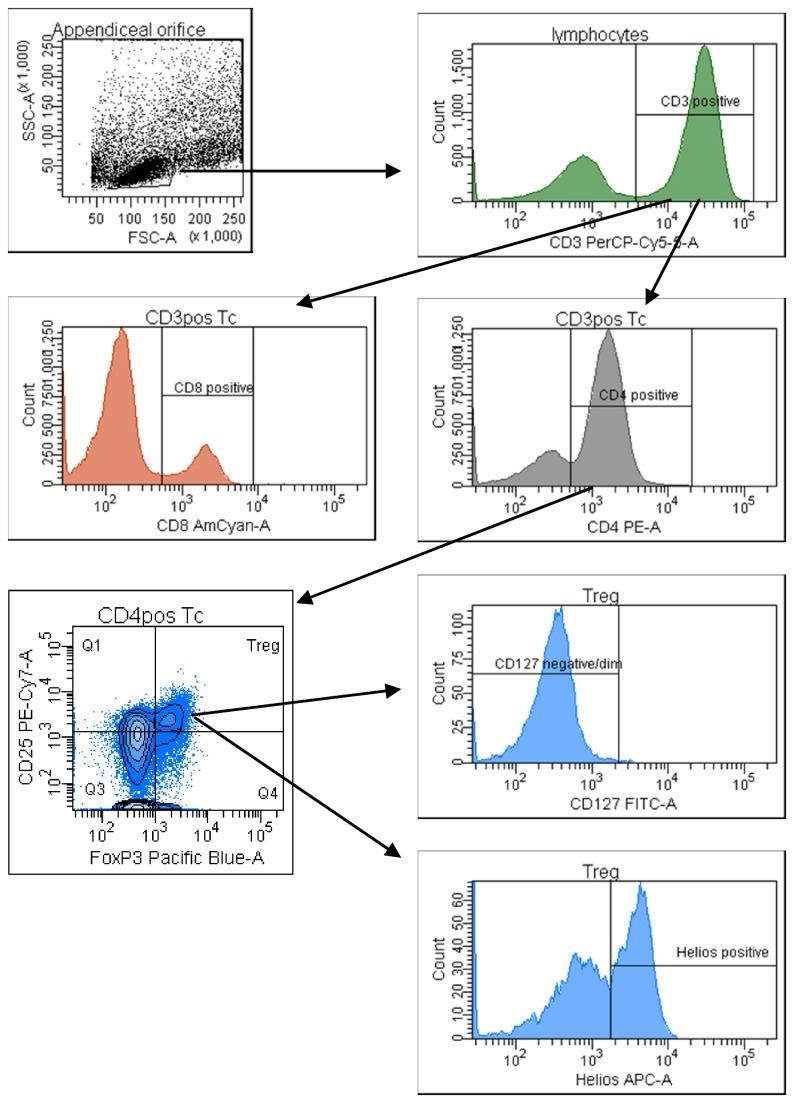 Representative gating strategy for the FACS analysis of lamina propria CD3+, CD4+, CD8+ and regulatory T-cells from pinch biopsies obtained from the appendiceal orifice region of one healthy subject.