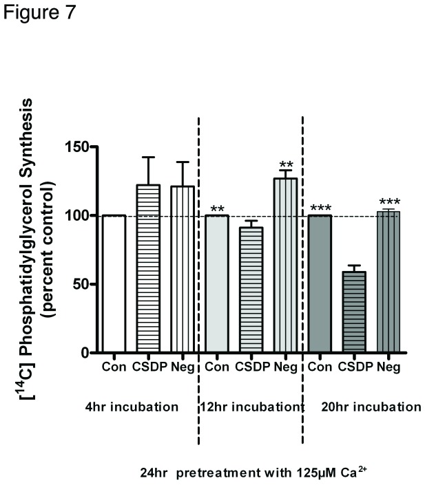 The caveolin-1 scaffolding domain peptide decreases phosphatidylglycerol levels in calcium-pretreated keratinocytes. Keratinocytes were pretreated for 24 hours with SFKM containing 125 µM calcium prior to treatment for the indicated times with vehicle (DMSO) or 3µM caveolin-1 scaffolding domain peptide (CSDP) or the negative control (Neg) as indicated. [ 14 C]Phosphatidylglycerol levels were then measured as described in the Materials and Methods. Values are expressed as the percent vehicle and represent the means ± SEM of 3 separate experiments performed in duplicate; **p