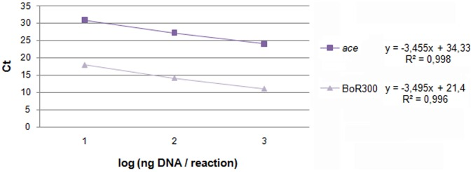 Standard curves for the reference single copy gene ( ace ) and the repeats of BoR300. The construction of the curves was based on serial 10-fold dilutions of the genomic <t>DNA</t> template used (10 pg, 100 pg, 1 ng). For each amplicon, <t>qPCR</t> determined Ct values were plotted against the logarithm of their initial concentration (1, 2 and 3 values respectively).