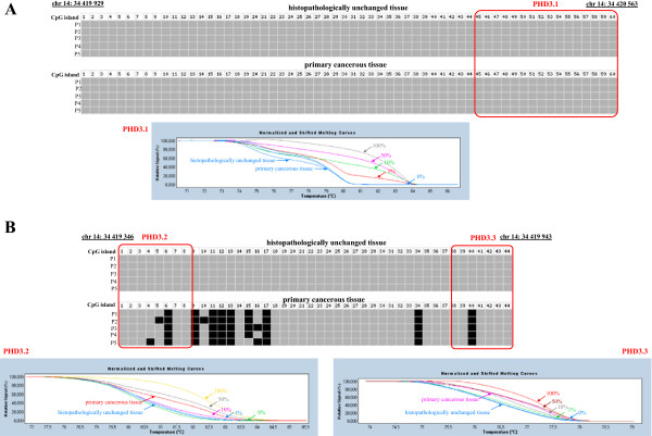 DNA methylation assessment of PHD3 gene regulatory region by bisulfite sequencing and HRM analysis in primary tissue samples from patients with CRC. Primary cancerous and histopathologically unchanged tissues from the same patients with CRC (P1-P5) were used for genomic DNA isolation followed by bisulfite conversion of cytosine to uracil. The PHD3 regions containing 60 CpG dinucleotides (chr14: 34 419 929-34 420 563) (Top panel A ) and 44 CpG dinucleotides (ch14: 34 419 346-34 419 943) (Top panel B ) were then amplified by a pair of primers complementary to the bisulfite-DNA modified sequence (Additional file 1 , Additional file 2 ). The PCR products were purified with subsequent cloning into a plasmid vector. Plasmid DNA isolated from five positive bacterial clones was used for commercial sequencing. The results of bisulfite sequencing were assessed and presented using BiQ analyzer software and BDPC web server [ 23 , 24 ]. Black and grey boxes represent methylated and unmethylated CpG dinucleotide, respectively. Red rectangles correspond to regions amplified in HRM analysis by specific primers PHD3.1 (chr14: 34 419 922-34 420 080), PHD3.2 (chr14: 34 419 795- 34 419 935) and PHD3.3 (chr14: 34 419 400-34 419 538) (Additional file 1 , Additional file 2 ). Bottom panels A and B represent HRM profiles of standard and example of patient DNA (patient P2 from bisulfite sequencing) PCR product. Methylation percentage of three DNA fragments within the PHD3 CpG island was determined by Real Time PCR amplification of bisulfite treated standard and patient DNA, followed by comparison of their HRM profiles. DNA standards were prepared by mixing different ratios of methylated and non-methylated bisulfite treated DNA. HRM methylation analysis was performed using Light Cycler®480 Gene Scanning software, Roche Diagnostics GmbH (Mannheim, Germany). Each PCR amplification and HRM profile analysis was performed in triplicate.