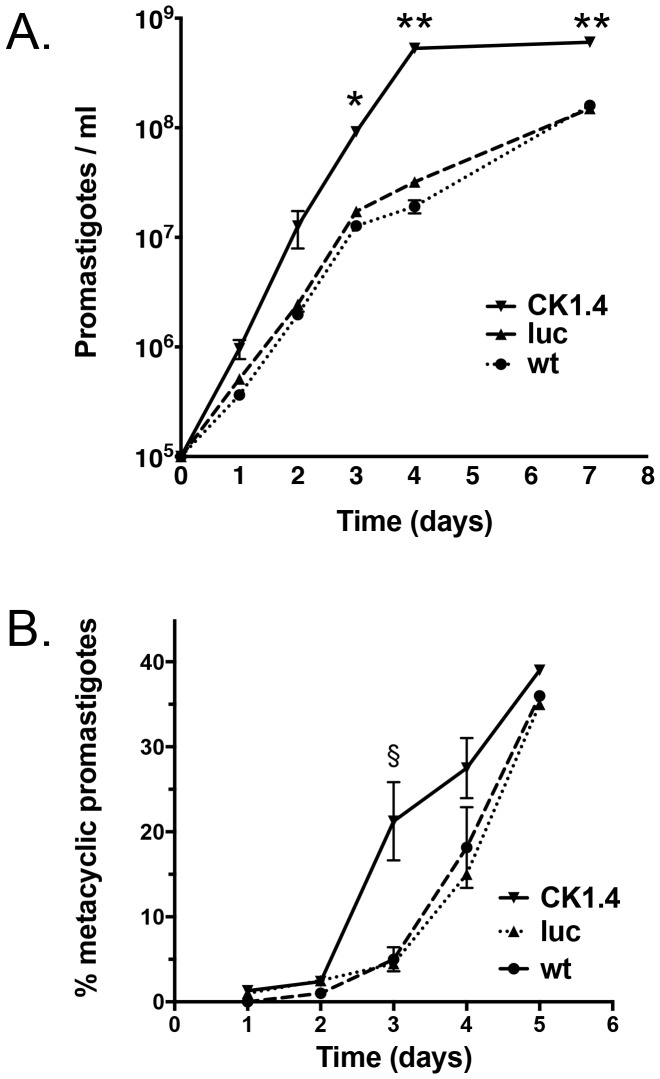 Comparison of wild-type and mutant promastigote growth and metacyclogenesis in culture. Promastigotes, Ld:wild type (wt), Ld:LUC (luc) and Ld:CK1.4-FLAG (CK1.4) expressing mutants, were diluted (10 5 cells/ml) at day 0 in complete culture media. Panel A. Parasite growth was monitored daily by counting live cells in a haemocytometer. All experiments were performed in triplicates. *, P