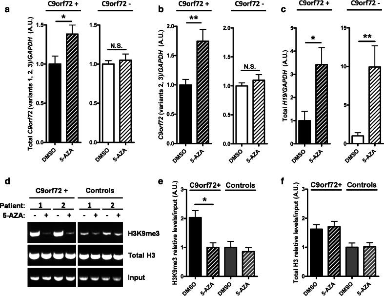 C9orf72 mRNA expression is increased and H3K9me3 binding is decreased in C9orf72+ fibroblasts upon 5-AZA treatment. a , b qRT-PCR of RNA obtained from human fibroblasts grown in DMSO or 5-AZA demethylating agent. Both assays targeting transcript variants 1, 2, 3 ( a ) and 2, 3 ( b ) show a significant increase in expression after 5-AZA treatment only in C9orf72 repeat expansion carriers. c qRT-PCR of H19 , an imprinted gene, showing effectiveness of the 5-AZA treatment in C9orf72+ and C9orf72− fibroblasts. Statistical differences were assessed by unpaired Student t test. * p