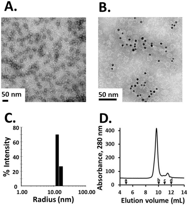 Pfs25-CP VLP particle analysis. (A) Negative stain transmission electron micrograph of Pfs25-CP VLPs shows highly uniform particles of 19.3±2.4 nm in diameter. (B) Transmission electron micrograph of Pfs25-CP VLPs labeled with anti-Pfs25 and gold-labeled anti-mouse antibodies confirms the presence of Pfs25 on the particles. (C) DLS histogram showing a narrow size distribution for Pfs25-CP VLPs. The average hydrodynamic radius is ∼14 nm with a polydispersity of