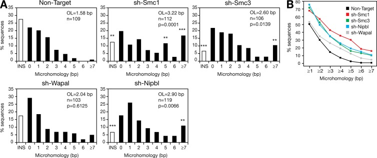 Knockdown of cohesin affects NHEJ. (A) CH12 cells were transduced with a lentivirus expressing a GFP reporter and shRNAs specific for AID, Smc1, Smc3, Nipbl, Wapal, or a Non-Target control. 48 h after stimulation, GFP-expressing cells were sorted. Sμ-Sα switch junctions were amplified by PCR, cloned, and sequenced. Bar graphs show the percentage of switch junction sequences with indicated nucleotide overlap. Number of junctions analyzed (n), mean length of overlap (OL), and p-values relative to the Non-Target control (Mann-Whitney test) are indicated. White bars indicate the percentage of sequences with small (1–4 nucleotides) insertions. Overlap was determined by identifying the longest region of perfect uninterrupted donor/acceptor identity. Sequences with insertions were not included in the calculation of the mean length of overlap. Significant differences relative to the Non-Target control (χ2 test) are indicated: **, P ≤ 0.01; ***, P ≤ 0.0001. Data are from three independent experiments. (B) Cumulative percentage of sequences with a given length of microhomology (bp) and obtained from CH12 cells transduced with lentiviruses expressing shRNAs specific for Smc1 (red squares), Smc3 (green squares), Nipbl (blue squares), Wapal (gray squares), or a Non-Target negative control (black squares) and sorted for GFP expression. Data are from three independent experiments.
