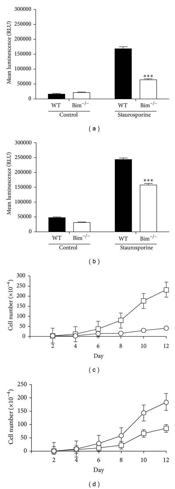 Modulation of proliferation in Bim −/− cells. Wild-type and Bim −/− retinal endothelial cells (panel (a)) and pericytes (panel (b)) were incubated with 10 nM staurosporine for 24 hours. Apoptosis was determined using a Caspase-Glo 3/7 assay. Wild-type and Bim −/− retinal endothelial cells (panel (c)) and pericytes (panel (d)) were monitored for their growth rate over a two-week time frame for wild-type (○) and Bim −/− (□) cells. These experiments were repeated twice with similar results (*** P